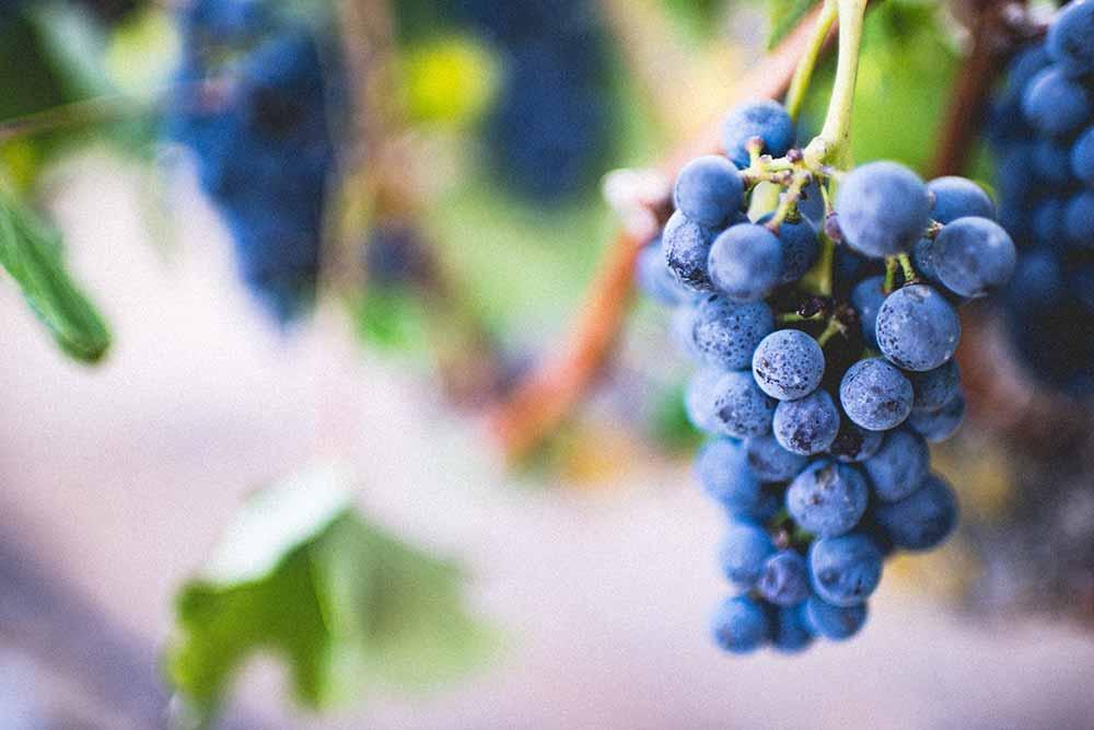Die besten Weine Österreichs