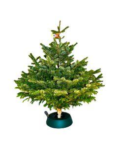 Premium Christbaum Nordmanntanne - diverse Größen