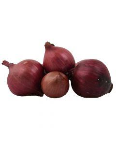 Zwiebel Rot